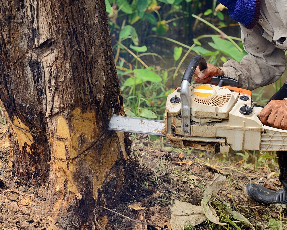 Tree Service Albuquerque - Tree Removal