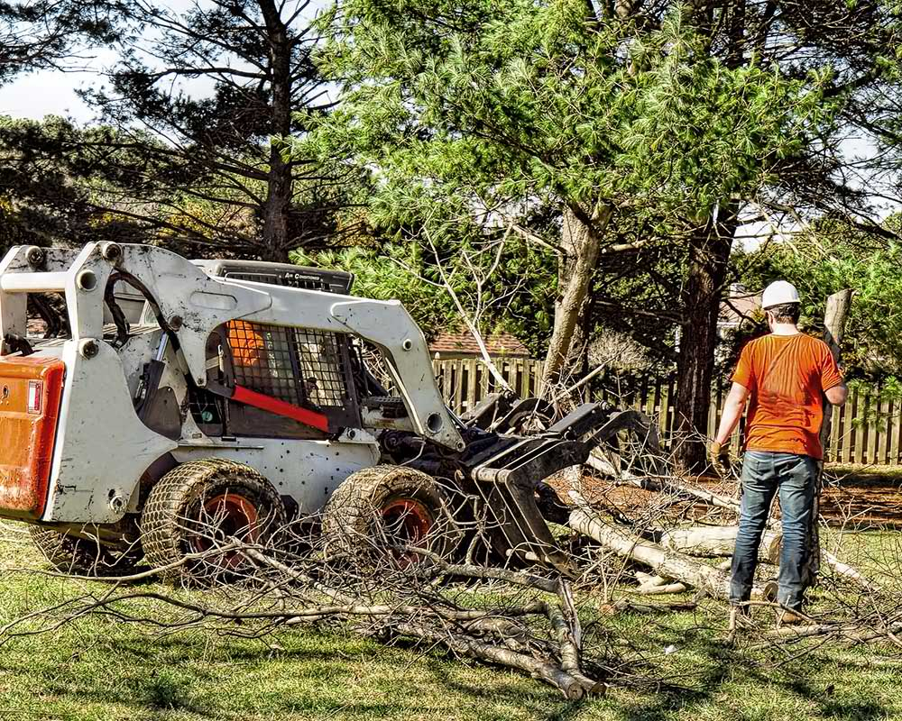 Tree Service Albuquerque - Arborist