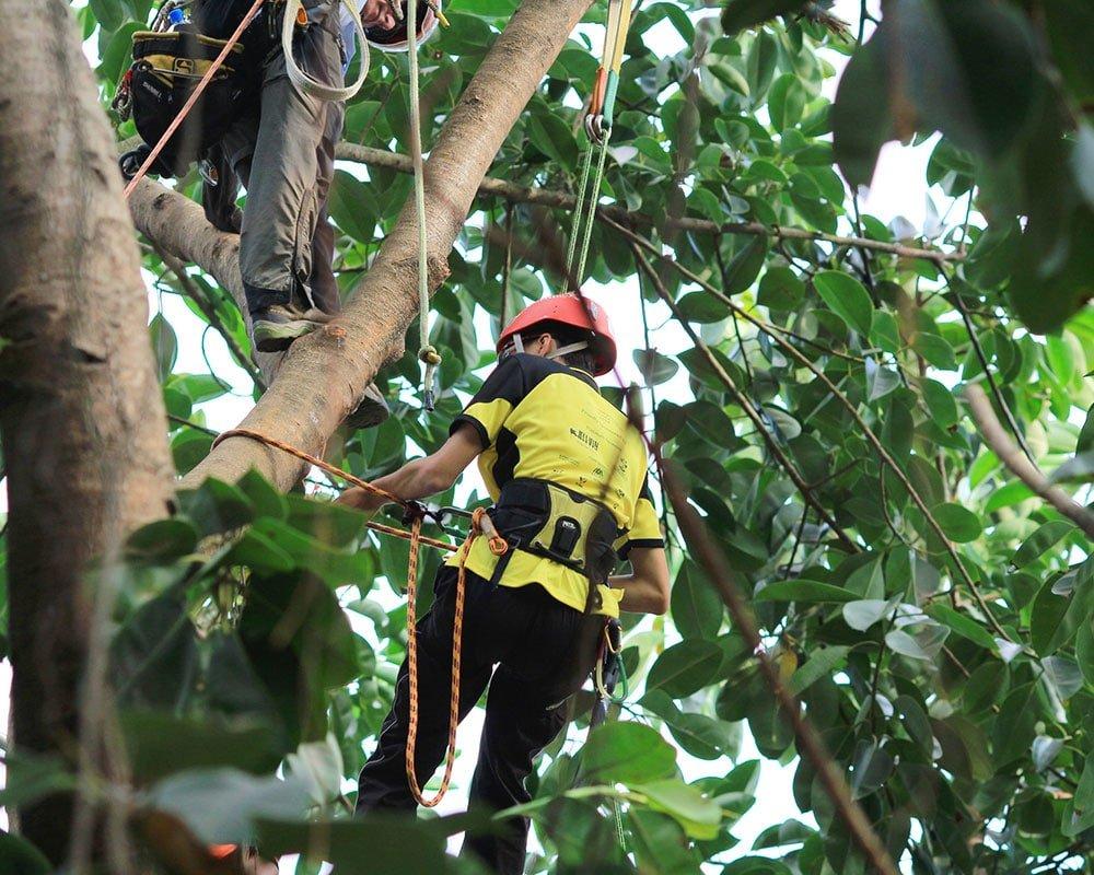 Tree Service Albuquerque - Emergency Tree Removal