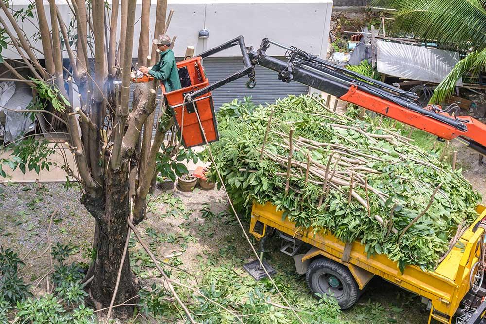 Tree Service Albuquerque - Tree Pruning
