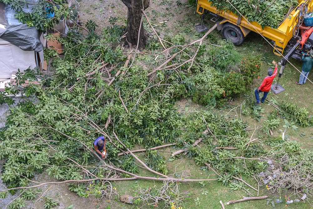 Tree Service Albuquerque - Tree Trimming